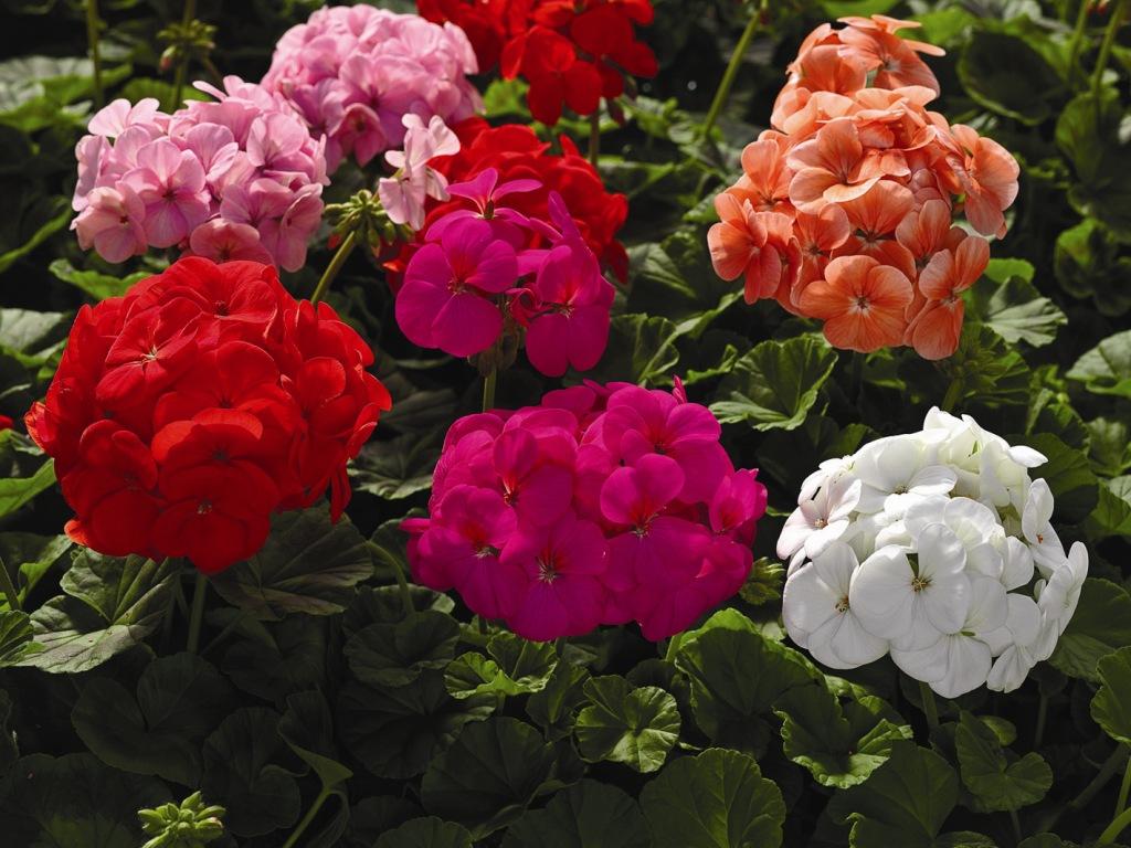 Рассада цветов  flowervalleyru