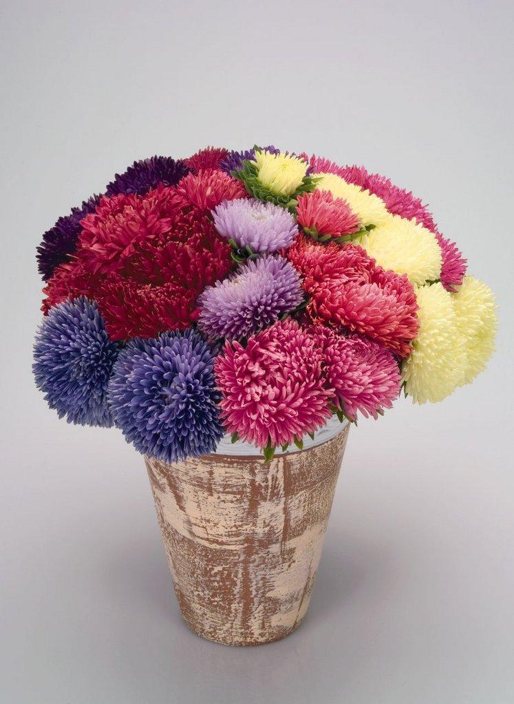 Фото с сортами цветов